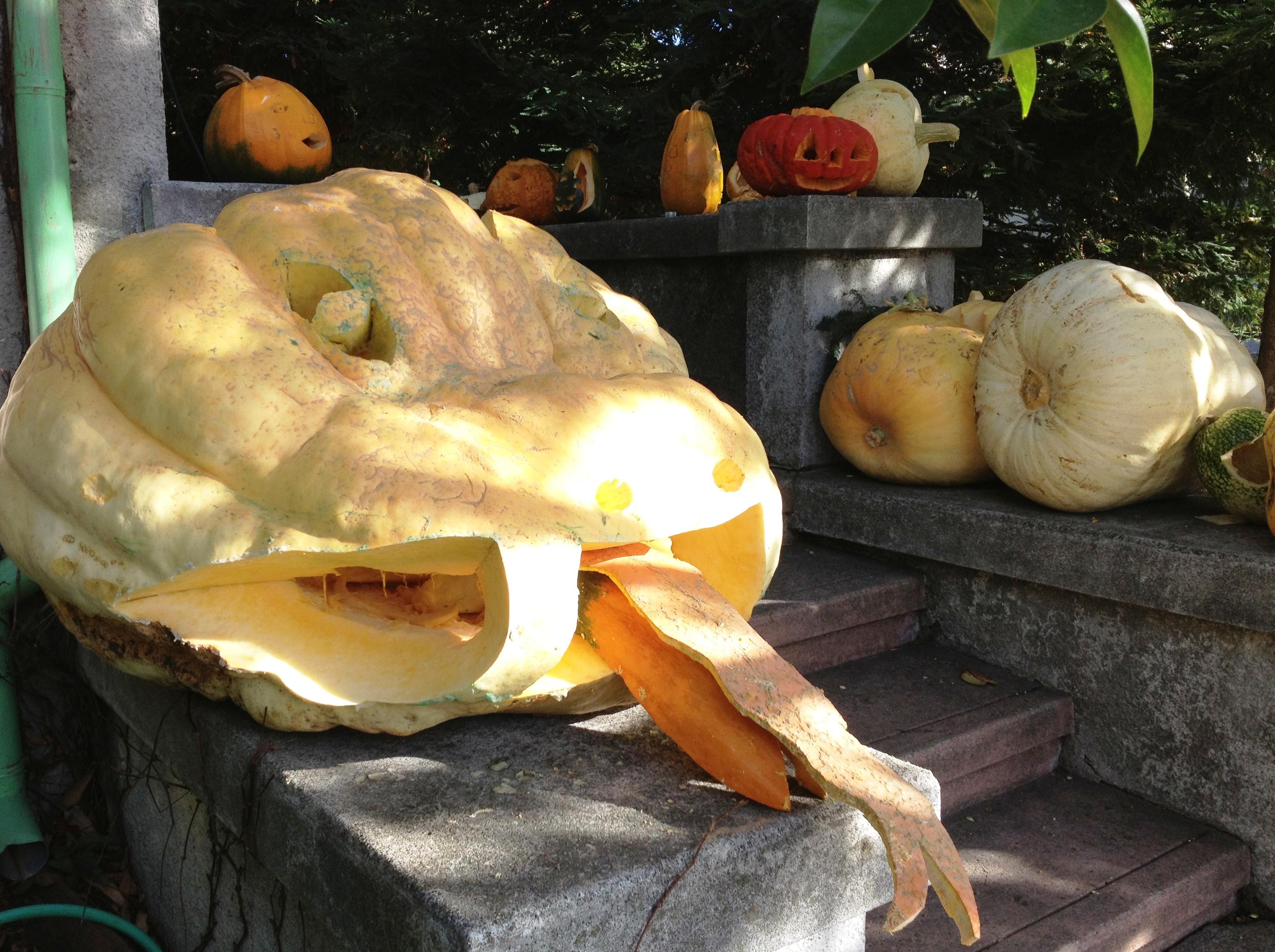 Halloween Pumpkin Treats In Berkeley Ca